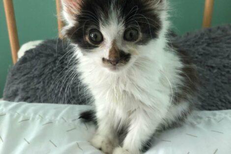A cat fostered by Becky Rosenbauer