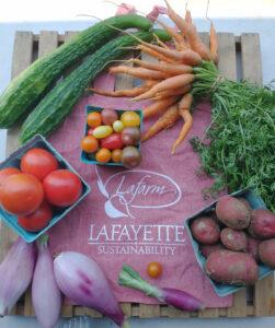 Carrots, onions, potatoes, cherry tomatoes, regular tomatoes, carrots, onions, and squash