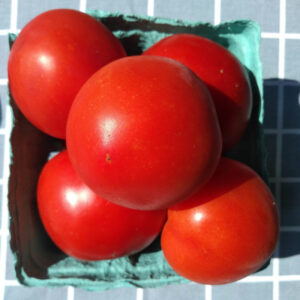 A quart of red tomatoes
